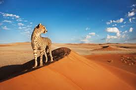 Fun facts about Namibia interesting facts