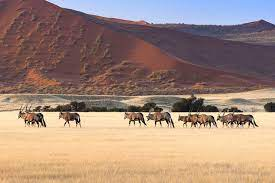 Fun facts about Namibia desert