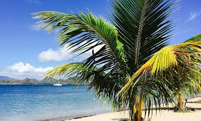 Facts about St Kitts Navis